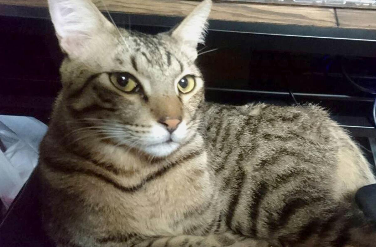猫が目をあわせてくるのは喧嘩を売っているから。でも実は、それだけでは無いんだよ、知ってた?