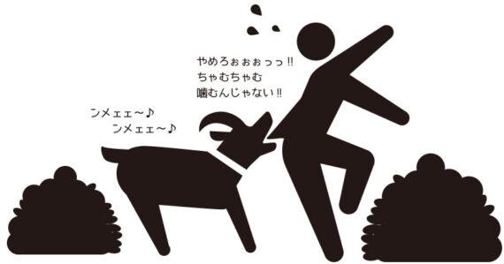 広い敷地は草刈りも大変。それならヤギにやってもらおう!ヤギを借りてエコ除草!