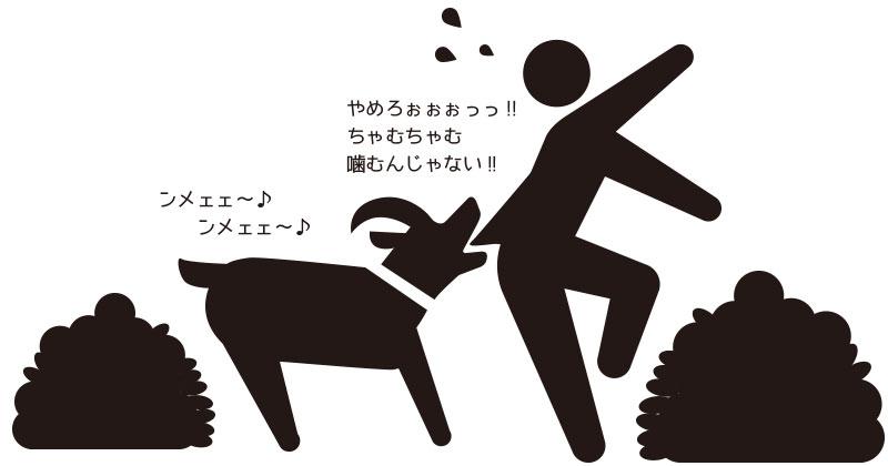 庭掃除に山羊を使うと楽だけど微妙なとこもあるよ